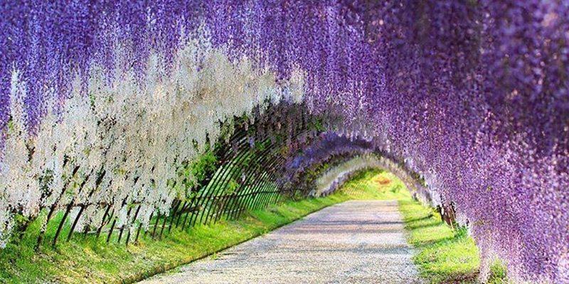 Spot Wisata Favorit Terbaru di Jepang