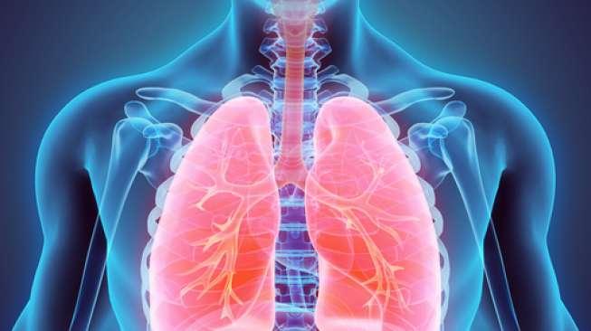 3 Fakta tentang Paru-paru