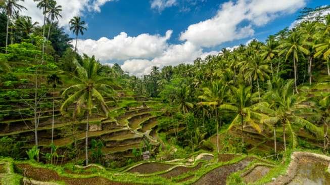 Ini Daftar 10 Desa Terbaik di Indonesia