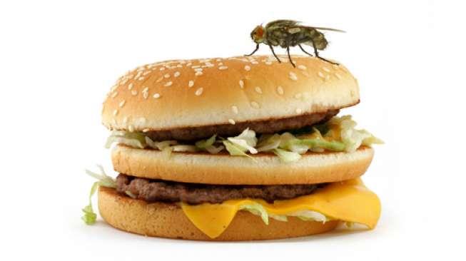Jumlah Kuman yang Dibawa Lalat Saat Hinggap di Makanan