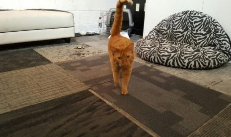 Kucing Ini Kembali Pulang Setelah Bertualang 800 Mil