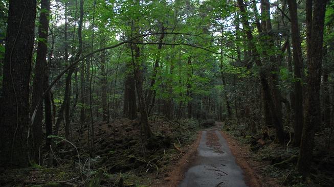 Qory Gore dan Perilaku Tak Pantas di Hutan Aokigahara