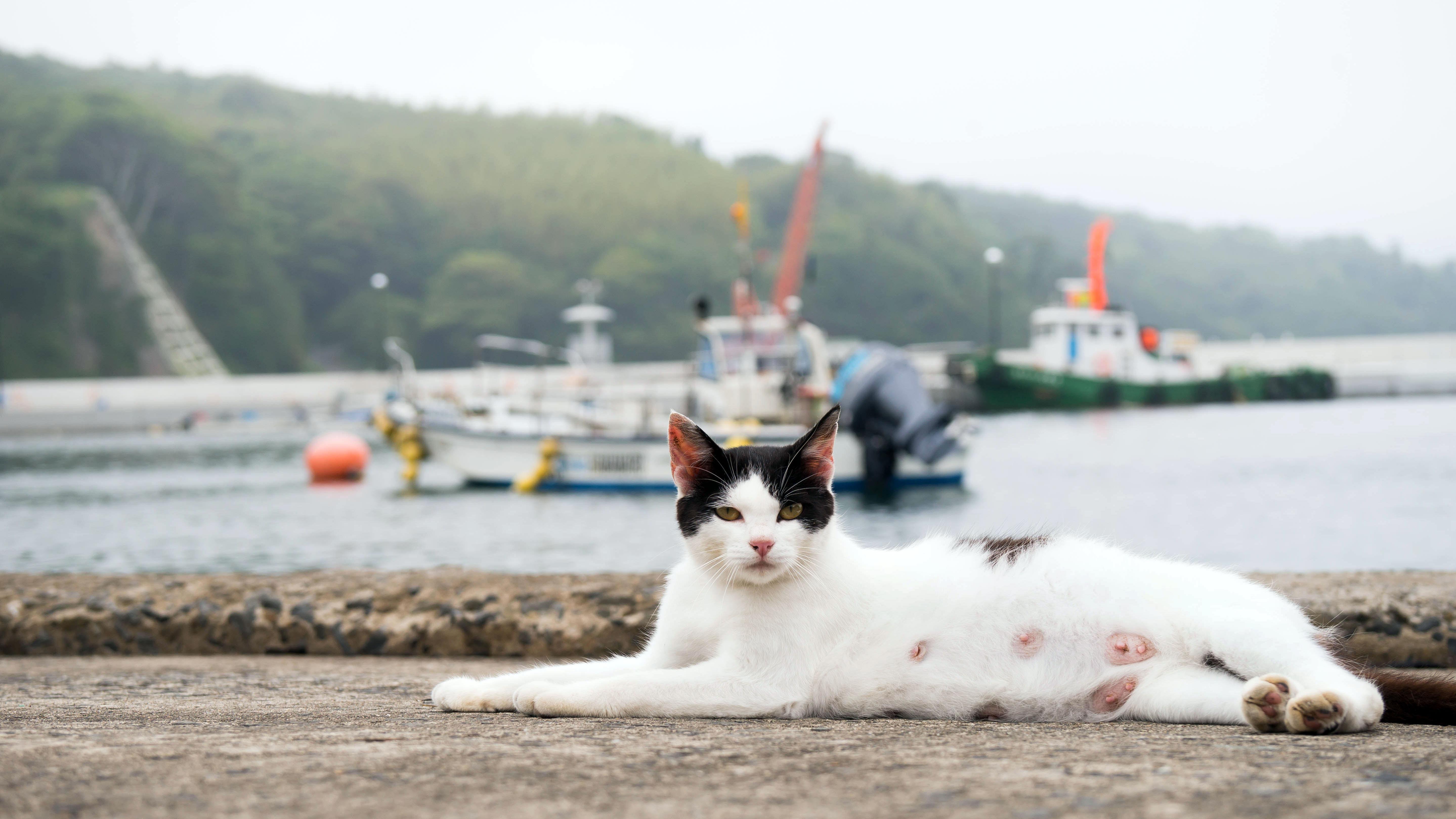 Tashirojima, Pulau di Jepang yang 'Dikuasai' Ratusan Kucing